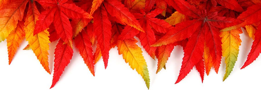 Autumn Accommodation offers at THe Kingswood Hotel, Fife Scotland
